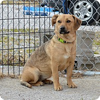 Adopt A Pet :: Jaycie - Indianapolis, IN