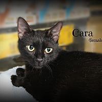 Adopt A Pet :: Cara - Springfield, PA