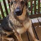Adopt A Pet :: Aubrey