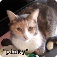 Adopt A Pet :: Pinky - El Cajon, CA