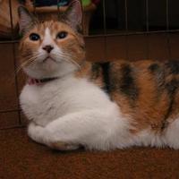 Adopt A Pet :: Missy - Salem, OH