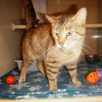 Adopt A Pet :: 9640 Kita - Erie, PA