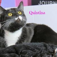 Adopt A Pet :: Quintina - Crossfield, AB