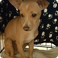 Adopt A Pet :: Dollie - Tucson, AZ