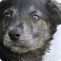 Adopt A Pet :: Akaid - Germantown, MD