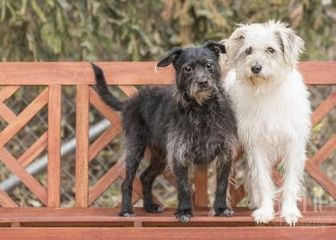 Terrier (Unknown Type, Small) Mix Dog for adoption in Waco, Texas - Franklin