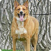 Adopt A Pet :: Evie - Denver, CO