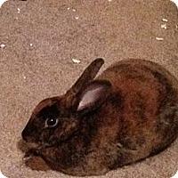 Adopt A Pet :: Toast - Lakeland, FL