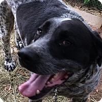 Adopt A Pet :: Kevin - Danbury, CT