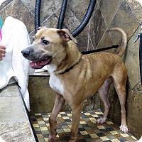 Adopt A Pet :: Eli - Van Wert, OH