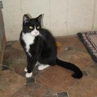 Adopt A Pet :: Kramer - Hopkins, SC