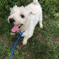 Adopt A Pet :: Tom - BATH, NY