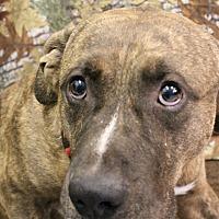 Adopt A Pet :: Leroy - Huachuca City, AZ