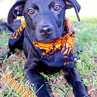 Adopt A Pet :: Spunky - Batesville, AR