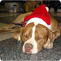 Adopt A Pet :: Folsom - Scottsdale, AZ