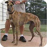 Adopt A Pet :: Fairy - Oak Ridge, NC