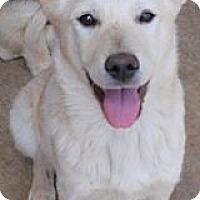 Adopt A Pet :: Jerrod - dewey, AZ