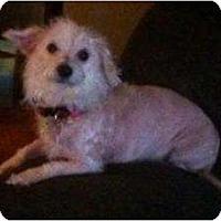 Adopt A Pet :: Friskie - Russellville, AR