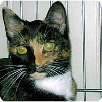 Adopt A Pet :: Sweet Pea - Medway, MA