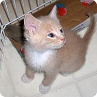 Adopt A Pet :: Boomer - Richmond, VA