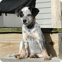 Adopt A Pet :: Elsa - Beachwood, OH