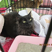 Adopt A Pet :: Graham - Long Beach, CA