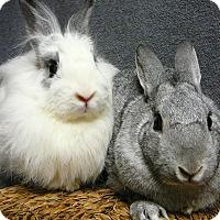 Adopt A Pet :: Bon Bon and Shiloh - Newport, DE