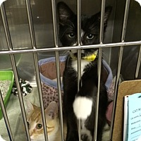 Adopt A Pet :: Twist - Byron Center, MI