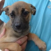 Adopt A Pet :: Chardonnay - Scottsdale, AZ
