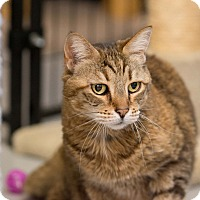 Adopt A Pet :: Tucson - Fountain Hills, AZ
