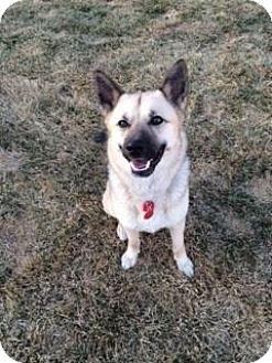 German Shepherd Dog Mix Dog for adoption in Saskatoon, Saskatchewan - Shyla