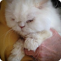 Adopt A Pet :: Montecarlo - Columbus, OH