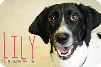 Beagle/Hound (Unknown Type) Mix Dog for adoption in Hamilton, Ontario - Lily