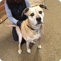 Adopt A Pet :: Sophie - Bellingham, WA