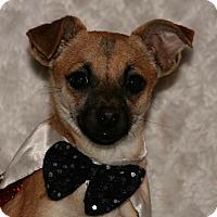 Adopt A Pet :: Jackson - Beavercreek, OH
