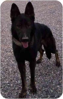 German Shepherd Dog Dog for adoption in Las Vegas, Nevada - Rommoe