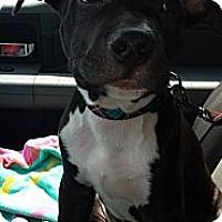 Adopt A Pet :: Channing - WARREN, OH