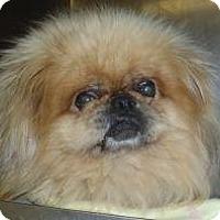 Adopt A Pet :: Tommy - Richmond, VA
