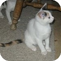 Adopt A Pet :: K-Sissy4-Minerva - Colorado Springs, CO