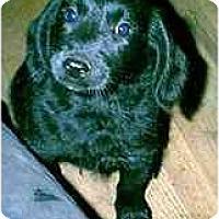 Adopt A Pet :: Tonka - dewey, AZ