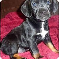 Adopt A Pet :: Calamity Jane - Sugarland, TX