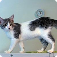 Adopt A Pet :: Charity - Victor, NY