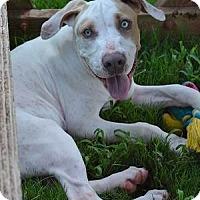 Adopt A Pet :: Justus - Athens, GA