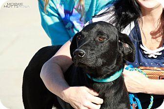 Labrador Retriever Mix Dog for adoption in Minneapolis, Minnesota - Luke