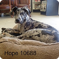 Adopt A Pet :: Hope - Greencastle, NC