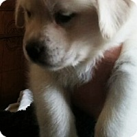 Adopt A Pet :: Milly - Treton, ON