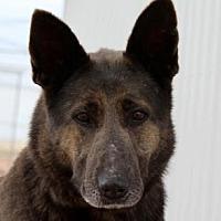 Adopt A Pet :: Brinda - Colorado Springs, CO