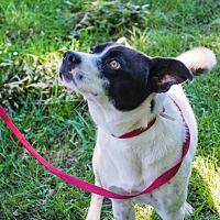 Adopt A Pet :: Mr X - Pittsburg, KS