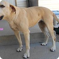 Adopt A Pet :: Pink - Oskaloosa, IA