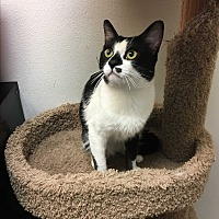 Adopt A Pet :: Willy - Foothill Ranch, CA